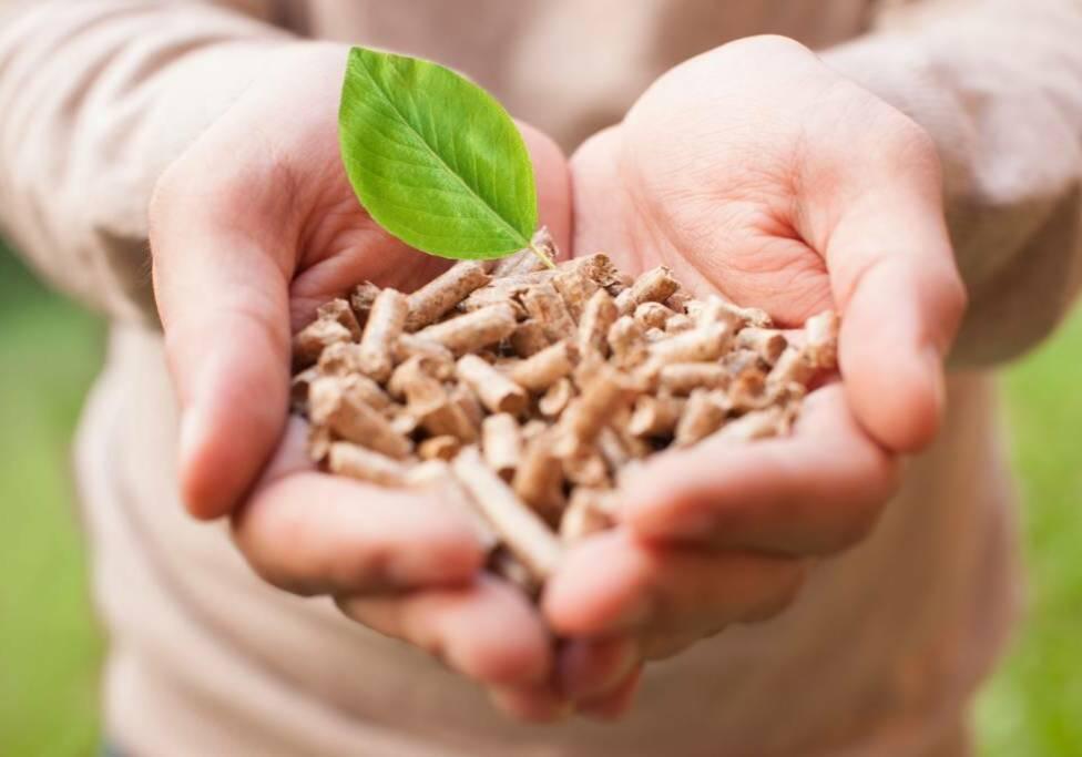 Belmans Recycling - Services - Valorisation Déchets Verts