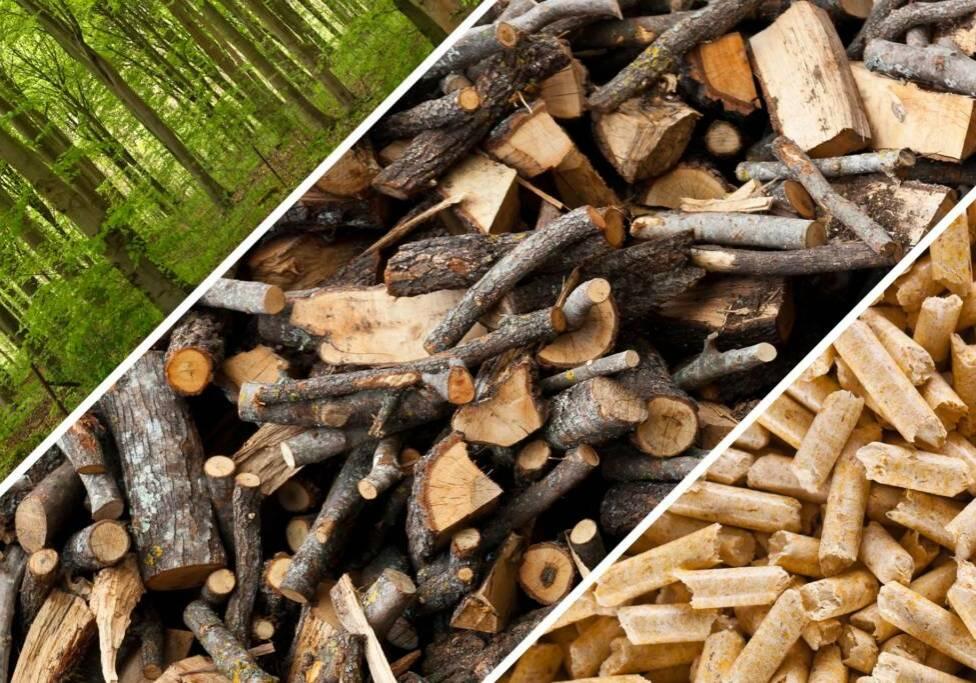 Belmans Recycling - Services - Valorisation Végétaux